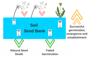 Seed Bank Diagram